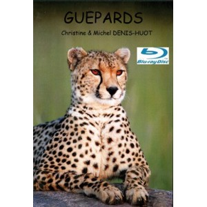 BLUE RAY GUEPARDS